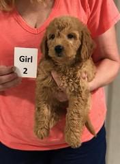 Gracie Girl 2 pic 4 8-1