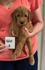 Gracie Girl 3 pic 2 8-1