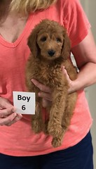 Gracie Boy 6 8-1