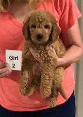Gracie Girl 2 8-1