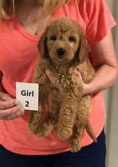 Gracie Girl 2 pic 2 8-1