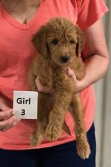 Gracie Girl 3 8-1