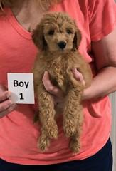 Gracie Boy 1 8-1