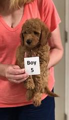Gracie Boy 5 pic 3 8-1