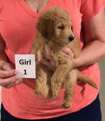 Gracie Girl 1 8-1