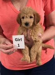 Gracie Girl 1 pic 3 8-1
