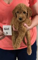 Gracie Girl 3 pic 4 8-1