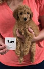 Gracie Boy 1 pic 3 8-1