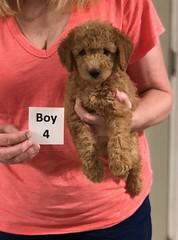 Gracie Boy 4 8-1