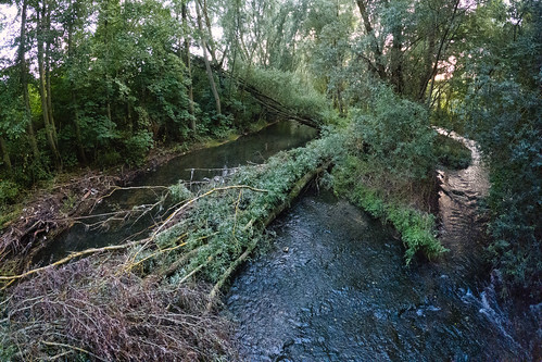 Fallen trees in the Alzette river in Schifflange