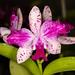 C. What'll It Be 'SVO Splash and Spots' – Anita Spencer