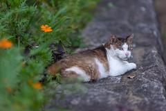 Stray cat hanging out in Kawasaki, Japan