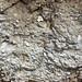 Fluvial gravel (Pleistocene; Spokane Sapphire Mine, Montana, USA) 15