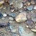 Fluvial gravel (Pleistocene; Spokane Sapphire Mine, Montana, USA) 10
