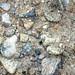 Fluvial gravel (Pleistocene; Spokane Sapphire Mine, Montana, USA) 13
