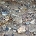 Fluvial gravel (Pleistocene; Spokane Sapphire Mine, Montana, USA) 8