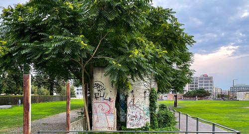 Mauerpark & Götterbaum