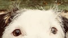 "#SBK9U • <a style=""font-size:0.8em;"" href=""http://www.flickr.com/photos/95808399@N03/51363525623/"" target=""_blank"">View on Flickr</a>"