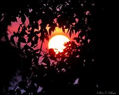 August 3, 2021 - Sunrise through the trees. (Bill Hutchinson)
