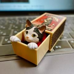 猫 cat マッチ箱 マッチボックス matchbox 船橋つとむ TsutomuFunabashi ガチャガチャ カプセルトイ ガシャポン ガチャ ガシャ Gachagacha Gacha Gashapon Gasha capsuletoy toy Japan 日本 東京 Tokyo ivvaDOTinfo ivva