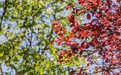 3 Links Road, Novar Gardens SA