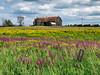 Barn and meadow