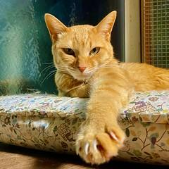 hand  cat 猫 ネコ ねこ catday Katze chat gatto gato feles кошка KAT gato ko?ka kass муур pisic?  日本 Japan ivvaDOTinfo ivva