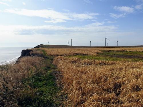 Easington Wind Farm