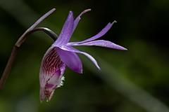Endangered Beauty