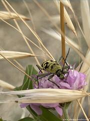 insecte_camargue