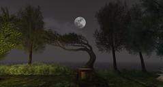 Late Summer Moonrise