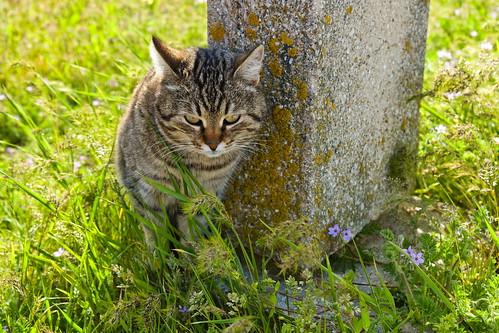 Cat ©  Alexxx Malev