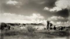 Chihuhuan Desert Landscape. Fort Davis, Texas