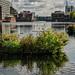 Millwall Inner Dock