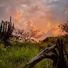 Parque da Cidade Dom Nivaldo Monte, Natal, RN