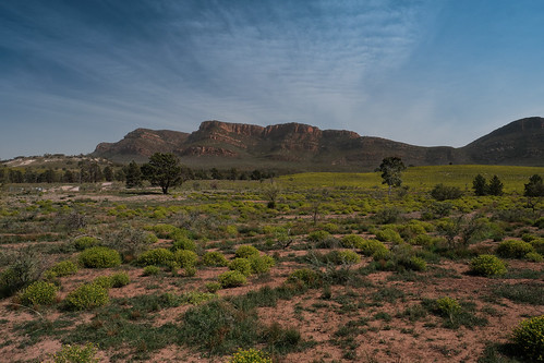 Flinders Ranges view, with spring flowers