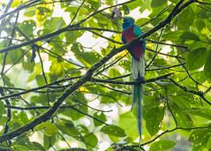 El Quetzal y su hábitat CONAP (1) by Conap Comunicación