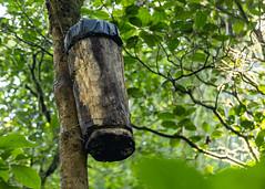 El Quetzal y su hábitat CONAP (2) by Conap Comunicación