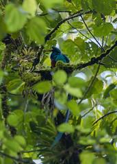 El Quetzal y su hábitat CONAP (3) by Conap Comunicación