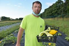 Eté 2021 - récolte des courgettes - Grand Tressan - Hotravail