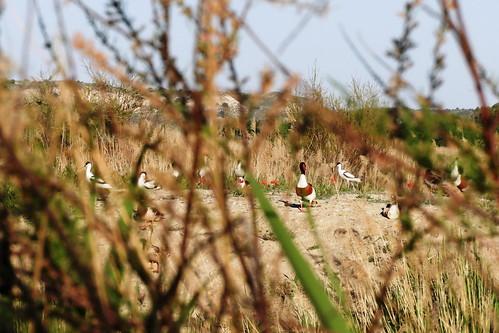 100 - Aves en la isla 2 un año después  - Mayo 2021.  Foto L.F. Basanta