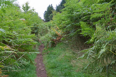 Photo of More ferns! 5D4_7360