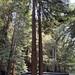 Redwood at Glen Blair Junction