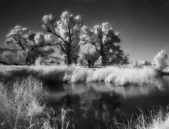 Cottonwoods and springs of Camp Peña Colorado. Black & white impressionistic.