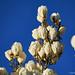 Magnolia Chandeliers