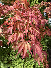 255/366: A Hint of Autumn