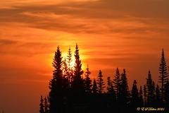September 11, 2021 - Silhouetted trees at sunrise. (Ed Dalton)