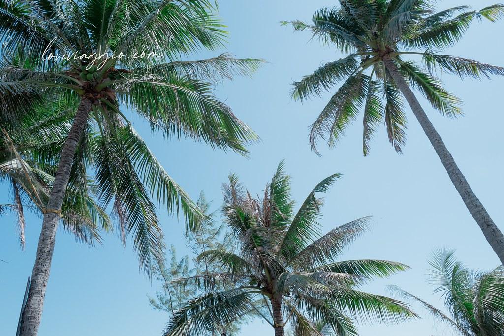 【台東 Taitung】卑南杉原椰林蔚藍海岸 可可娜咖啡置身海島異國渡假風 @薇樂莉 Love Viaggio | 旅行.生活.攝影