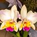Lc. Tokyo Magic x Pot. Martha Clarke 'Amazing' – Judy Dyer