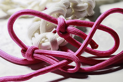 2021-256 Knots